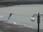 SX20359 Kite caught in lights by beach.jpg